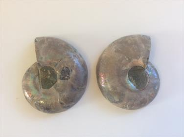 Ammonite Polished pair 5.5cm Madagascar