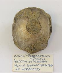 Coral Rhabdocyclus Hereford Diameter 7cm 145gms Old Collection Stone Treasures Fossils4sale