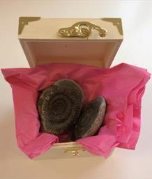 Ammonite Dactylioceras positive & negative Whitby N. Yorkshire in nodule in Gift Box. Unique for weddings & celebrations
