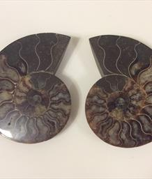 Ammonite Cut & Polished Madagascar pair 12cm Sourced by Stone Treasures fossils4sale