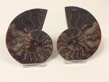 Ammonite Cut & Polished Madagascar pair 15.5cm Sourced bt Stone Treasures fossils4sale