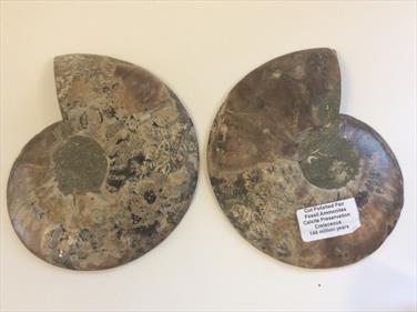 Ammonite Cut & Polished Madagascar pair 16cm diameter Cretaceous Sourced by Stone Treasures fossils4sale
