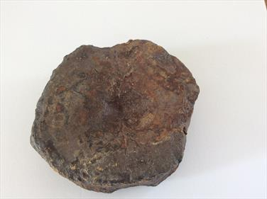 Plesiosaur Vertebra fossil Peterborough Diameter 8.5cm approx sourced by Stone treasure fossils4sale