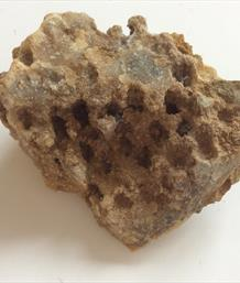 Coral Isatrea Calcite filled Drvd. Jurasssic. Farringdon UK 130g Stone Treasures Fossils4sale