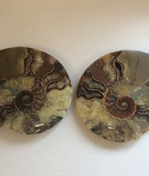 Ammonite Pair Large Cut & Polished Madagascar Diameter 17cm 1.11Kg Stone Treasures Fossils4sale